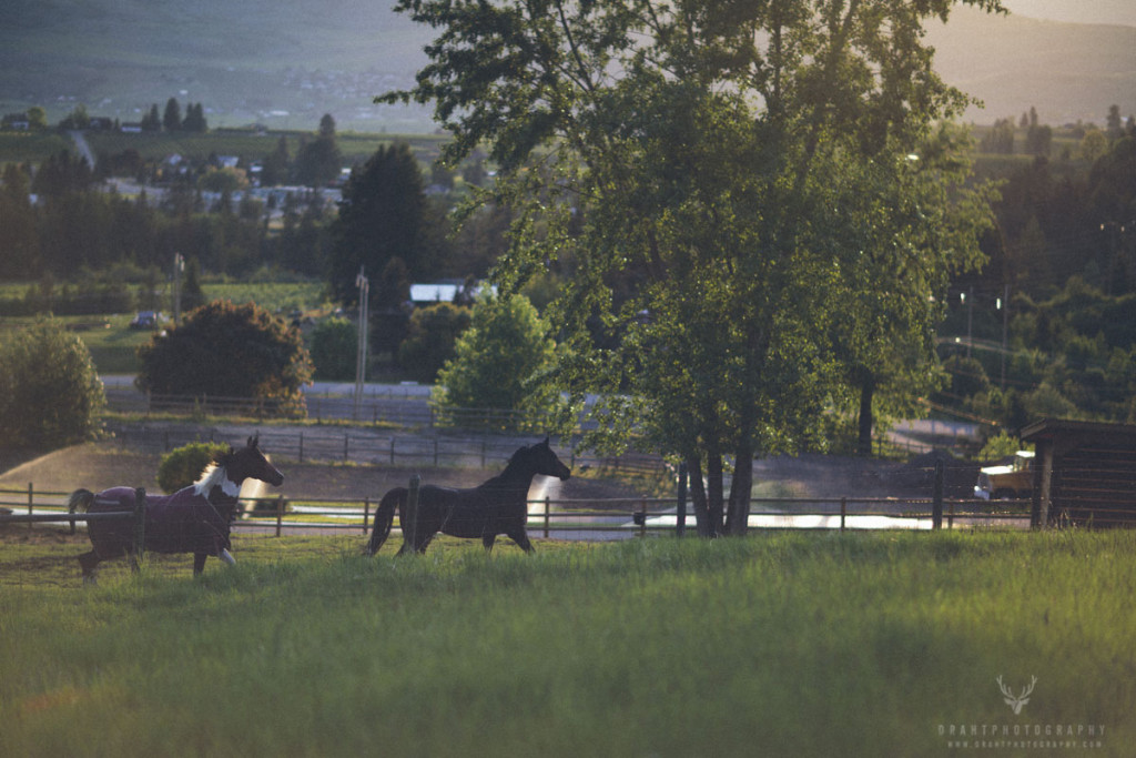 Few horses running around in Coldstream
